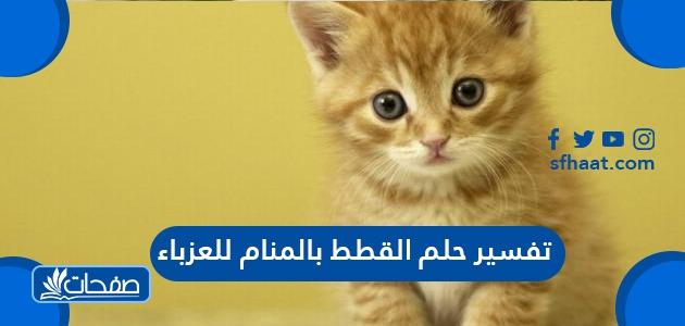 تفسير حلم القطط بالمنام للعزباء