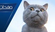تفسير رؤية القطط في المنام للعزباء والمتزوجة والحامل لابن سيرين والنابلسي
